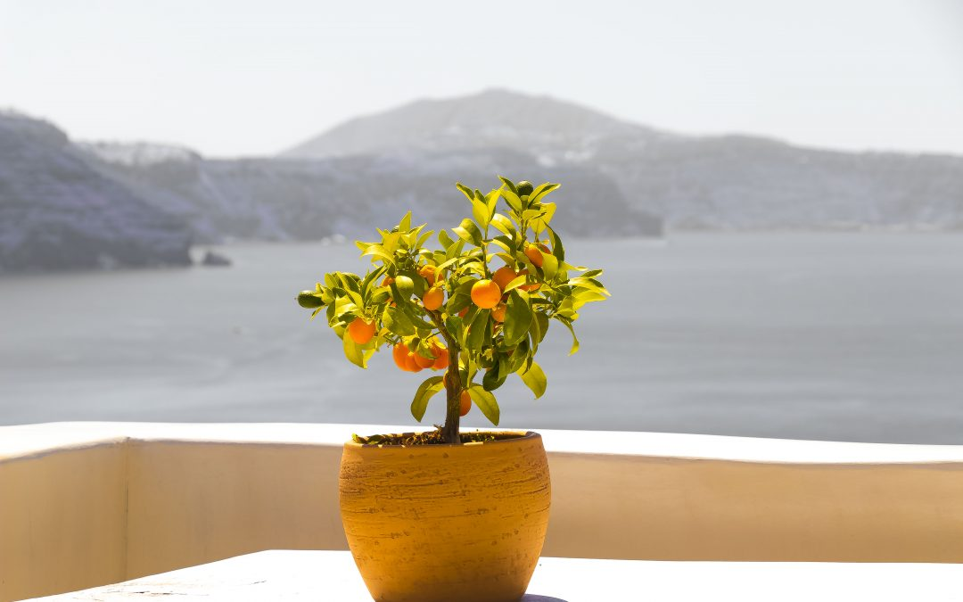 How to Begin Fresh Every Day (Santorini Smiles)